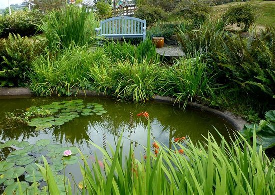 Flavel House Museum: Goldfish pond