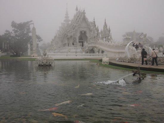 Wat Rong Khun : บรรยากาศของวัดท่ามกลางหมอกในหน้าหนาว