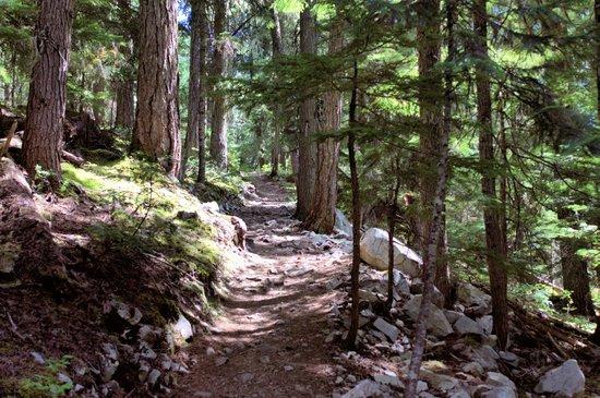 Ancient Cedars Trail