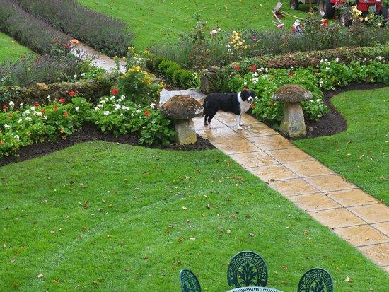 Charingworth Manor: Gardener's friendly dog