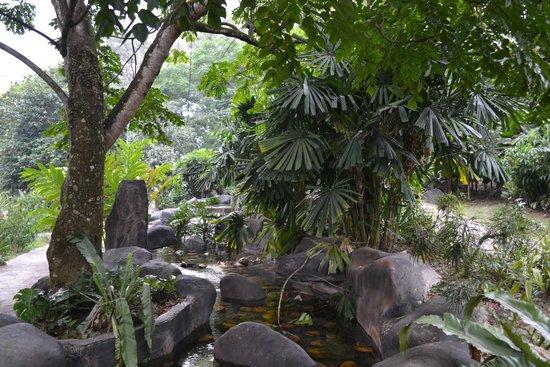 The Hibiscus Park: Фото 1