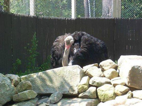 York's Wild Kingdom Zoo and Fun Park: Autruche à York