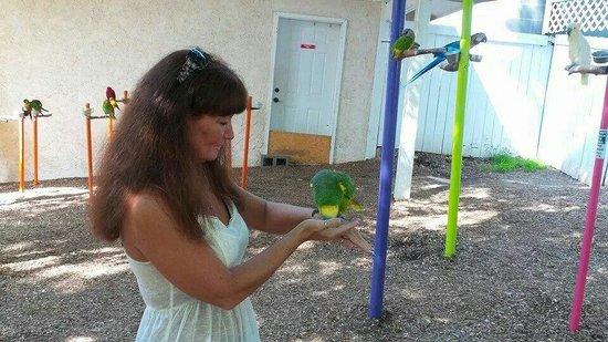 Parrot Mountain & Gardens: Love feeding the birds