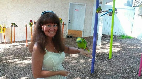 Parrot Mountain & Gardens: The birds love sitting on my arm