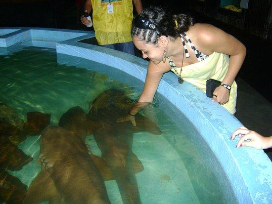 Aquario Natal: Tubarões lixa