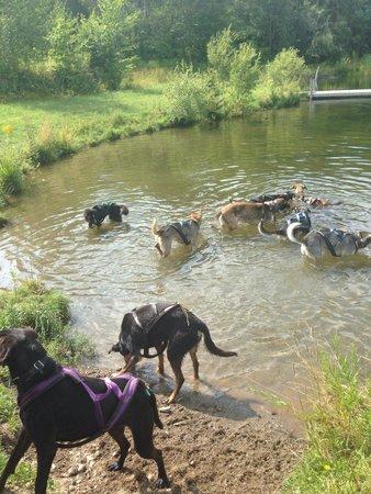 Eden Dogsledding: The pond