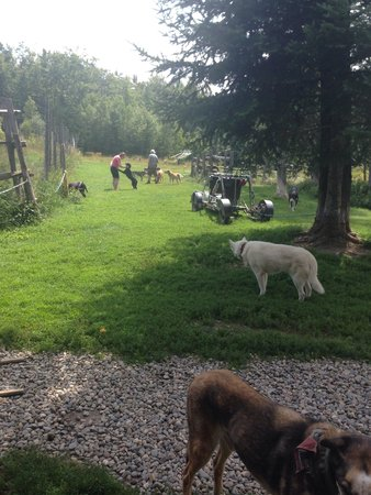 Eden Dogsledding: The dogs and the sled