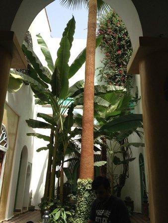 Maison Arabo Andalouse: Poolside view