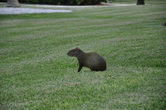 Grand Bahia Principe Tulum: Animaletto simpatico