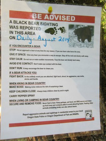 Lithia Park: watch for the bear