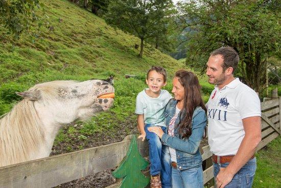 Hotel Stadt Wien: Petting zoo