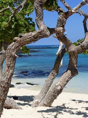 Kona Coast State Park: Shady beach park