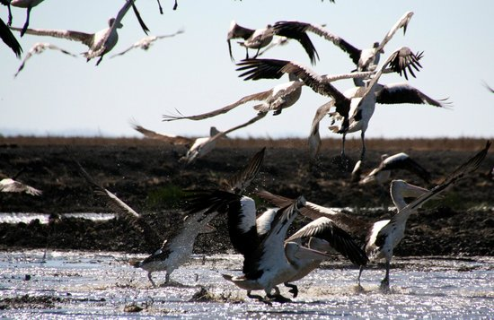 Australia Wide Safaris Carmor Plains Wildlife Reserve Air Boat Tours