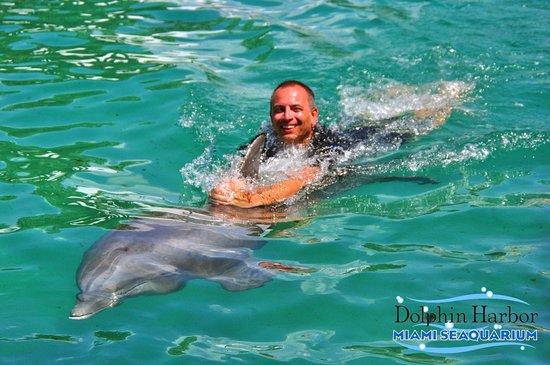 Bagno con i delfini picture of miami seaquarium miami tripadvisor