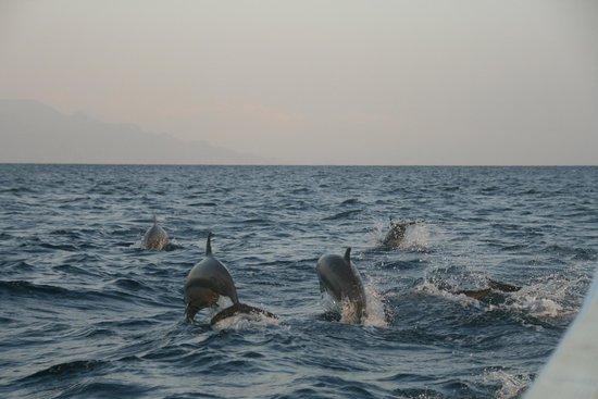 Cleopatra Beach Bungalows : Voor Cleopatra: dolfijn spotting