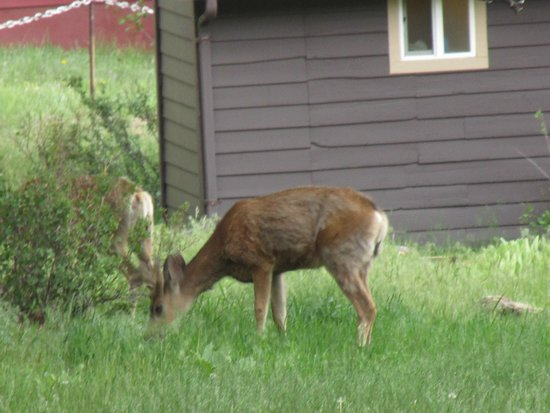 Valhalla Resort: Deer and elk graze throughout the campsite