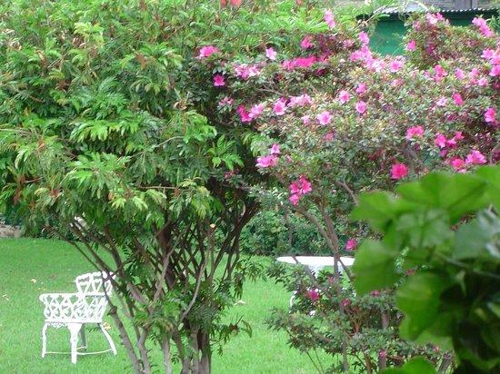 Hotel Regis Panajachel: Gardens