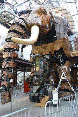 Les Machines de L'ile : The magical mystery mechanical elephant, having some tender loving maintenance!