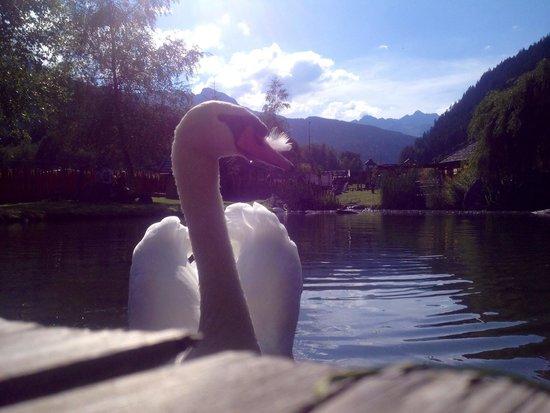 Alphotel Tyrol: 1