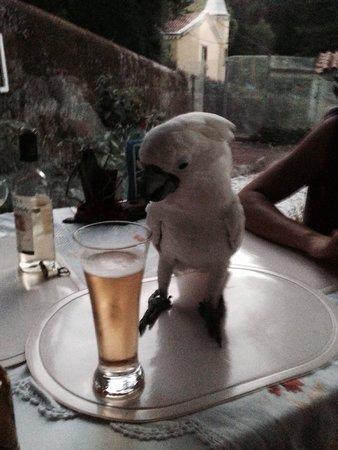 Quinta das Murtas: Having a beer with a parrot