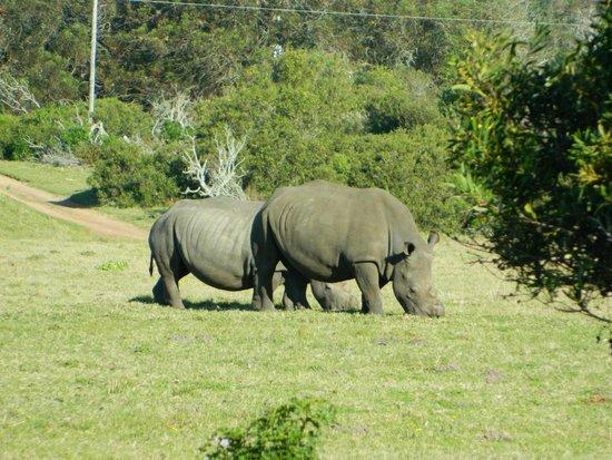 Kragga Kamma Game Park: I rinoceronti