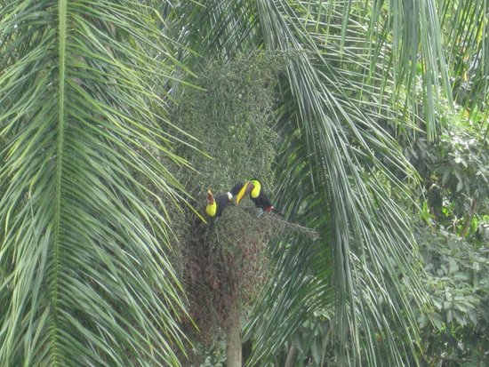 Cantina Salsipuedes: couple of Toucans, spotted from our table during lunch.  Beautiful birds