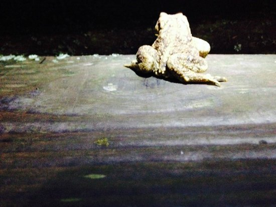 Mill Valley Yurts : A toad who we found on the steps to Beech Tree