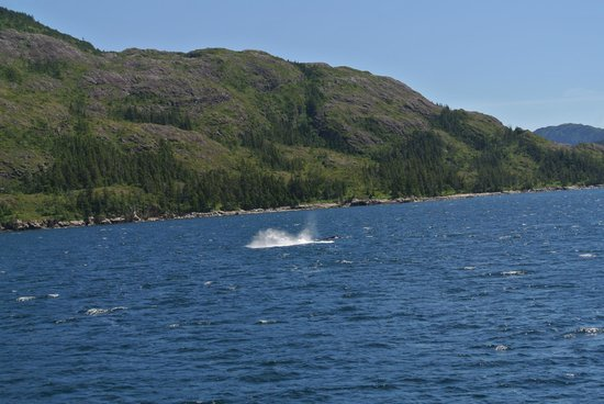 26 Glacier Cruise by Phillips Cruises and Tours: Whale breaching!