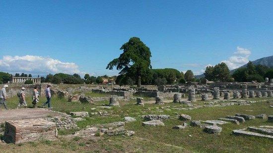 Templi Greci di Paestum: panorama