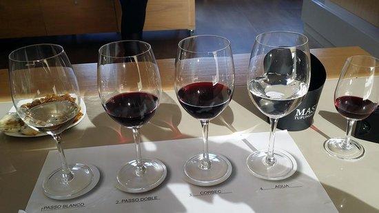 Ampora Wine Tours: Wine glasses with wine types