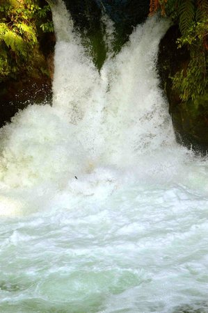 Kaitiaki Adventures: The 7-m waterfall.  Doesn't seem big, but if you look carefully, our raft is totally submerged.