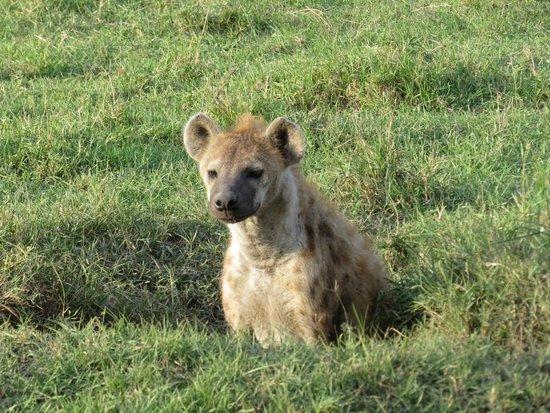 Governors' Il Moran Camp: Hyena