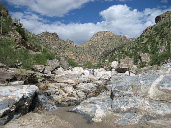 Sabino Canyon: a trail in Bear canyon part of Sabino