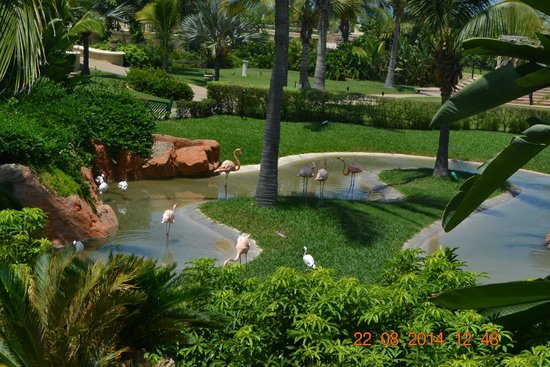 Pueblo Bonito Emerald Bay: Flamingos
