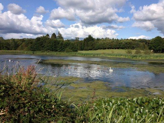 Cally Gardens: The artificial lake at Cally Palace