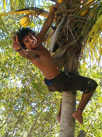 Hotel Villas Delfines: bajando cocos