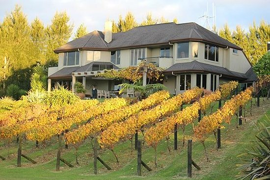 Matahui Lodge : The Lodge is set in vineyards beside a natural harbour