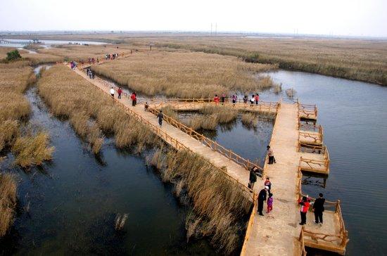 Dongying Huanghe Delta : Boardwalks through the wetland