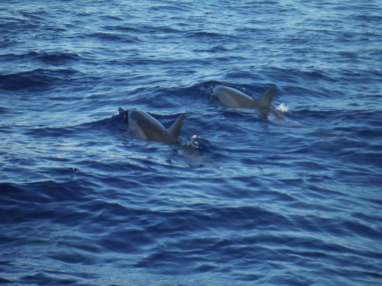 Blue Water Rafting : dolphins!!
