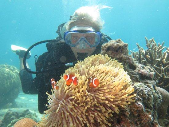 Tioman Dive Centre: Diver with Clownfish