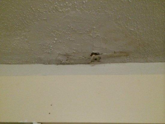 Bradford Inn & Suites: peeling ceiling