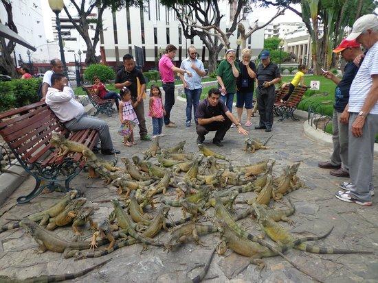 Resultado de imagem para parque de las iguanas guayaquil