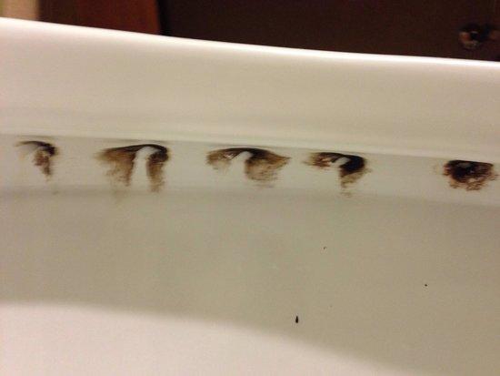 Hampton Inn Birmingham I-65/Lakeshore Drive : Mold in toilet