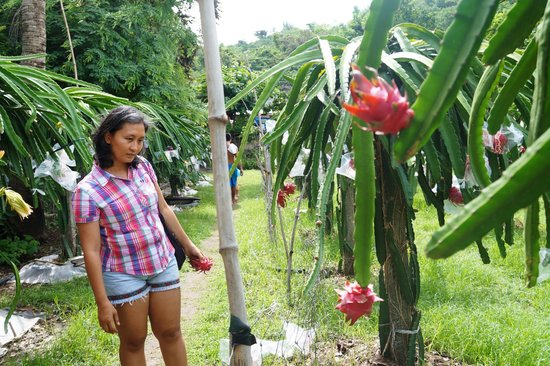 my daughter at the dragon fruit plantation of Lomboy Farms
