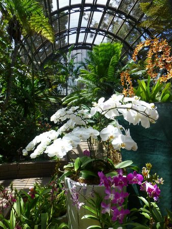 Botanical Building and Lily Pond : Orchids in bloom