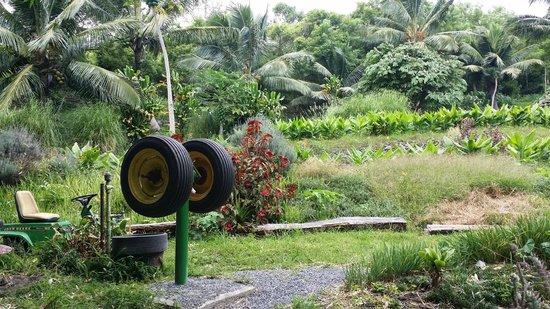 Paia, Hawaï : Lush little farm on the Hana trip