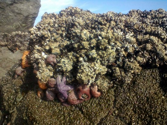 Windermere on the Beach: Treasures exposed during low tide Aug 2013