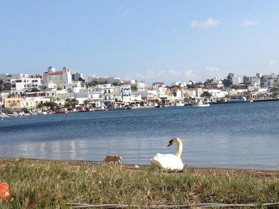 Allegria Family Hotel : Port