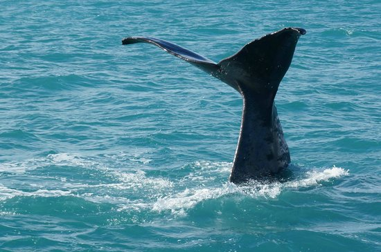 Whale Watch: Sperm Whale