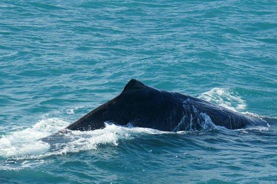 Whale Watch : Sperm Whale